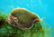 Photo of Existuje mořský šnek, který je zčásti živočich azčásti rostlina