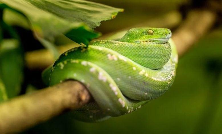 Hadi dokážou předpovídat zemětřesení