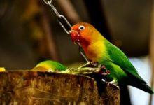 Photo of Nizozemská policie jednou zatkla papouška za účast přikrádeži