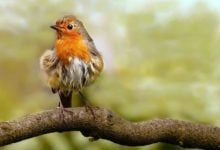 Photo of Ročně prý zemře jen vUSA až 1 miliarda ptáků ponárazu do okna