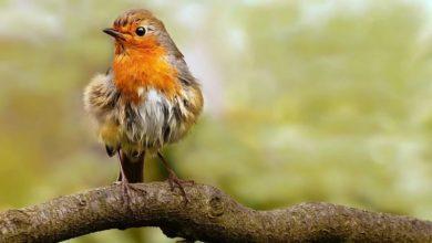 Photo of Ročně zemře jen vUSA až miliarda ptáků ponárazu do okna