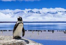 Photo of Téměř 3% antarktických ledovců tvoří moč tučňáků