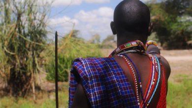 Photo of Po útocích z11.září poslal Masajský kmen jako pomoc 14 posvátných krav