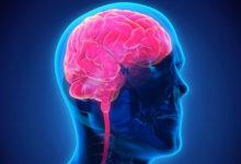 Photo of Lidský mozek pálí 20% kalorií, které přijmeme