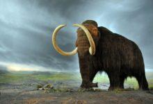 Photo of Na Zemi žili mamuti ještě stovky let podostavení pyramid vGíze
