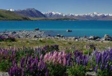 Photo of Australan se vroce 2006 pokusil prodat Nový Zéland na aukci eBay