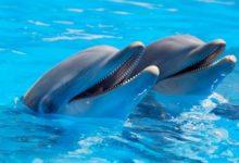 Photo of Delfíni spolu umí komunikovat potelefonu