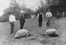 Photo of Nejstarší žijící želva na světě se vylíhla ještě před vynálezem žárovky