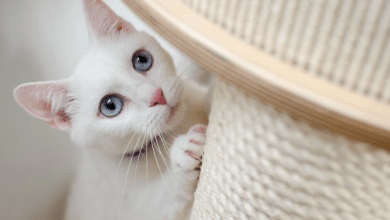 Photo of Kočky nerozumí principu trestání za špatné chování