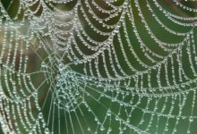 Photo of Ročně během spánku nesníme 8 pavouků. Reálně je to 0 za celý život