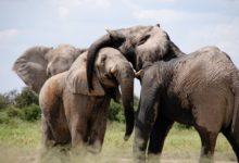Photo of Sloni apsi jsou jediná zvířata, která rozumí ukazování prstem