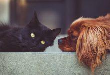 Photo of Psi akočky mohou být leváci nebo praváci