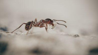 Photo of Mravenčí královna se může dožít až 30 let