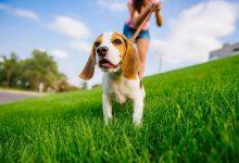 Photo of Když ssebou máte psa, snadněji si domluvíte rande avypadáte atraktivněji