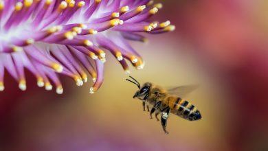 Photo of Včely létají tak, že nad sebou vytváří miniaturní hurikány