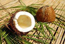 Photo of Většinu kokosů trhají ze stromů opice